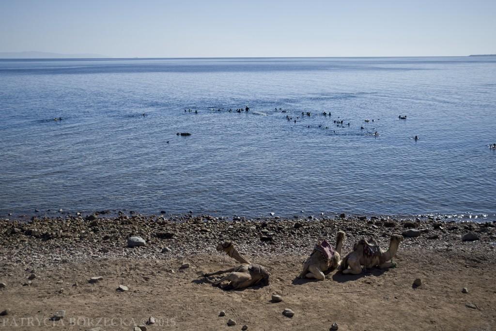 Inną popularną atrakcją jest nurkowanie w Blue Hole. Jedno z najlepszych miejsc nurkowych na świecie. Nie bez powodu. Rafy są obfite w życie morskie. Na fotografii widać licznych płetwonurków wynurzających się z wody.