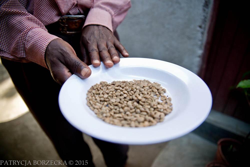 Na tym zdjęciu widać już tylko dobre, przesortowane wcześniej ręcznie przez Josepha ziarenka kawy.