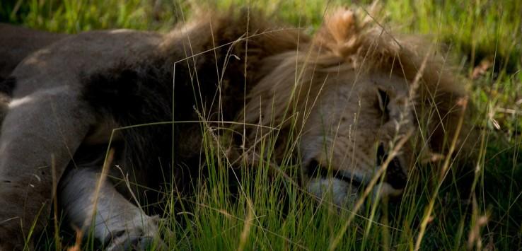 Safari-PatrycjaBorzecka-11