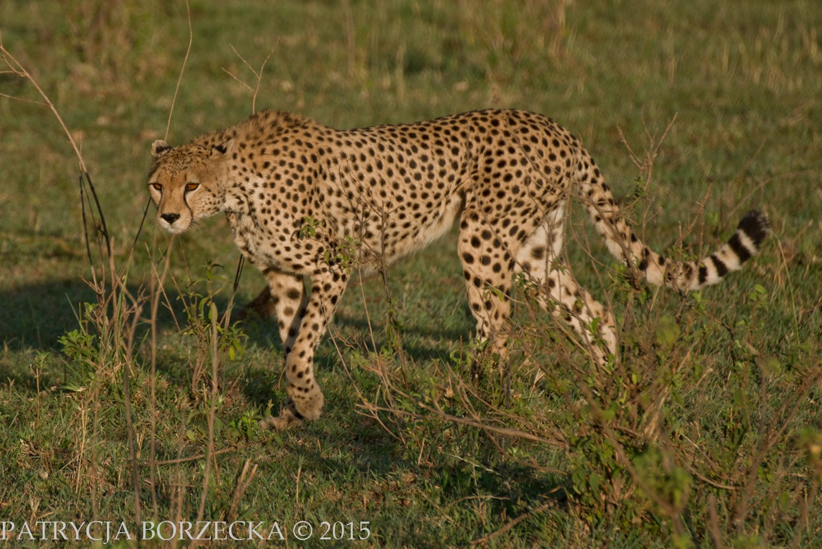 Safari-PatrycjaBorzecka-17