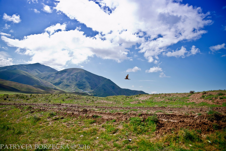 PatrycjaBorzeckaPhoto-Iran-April2016-01
