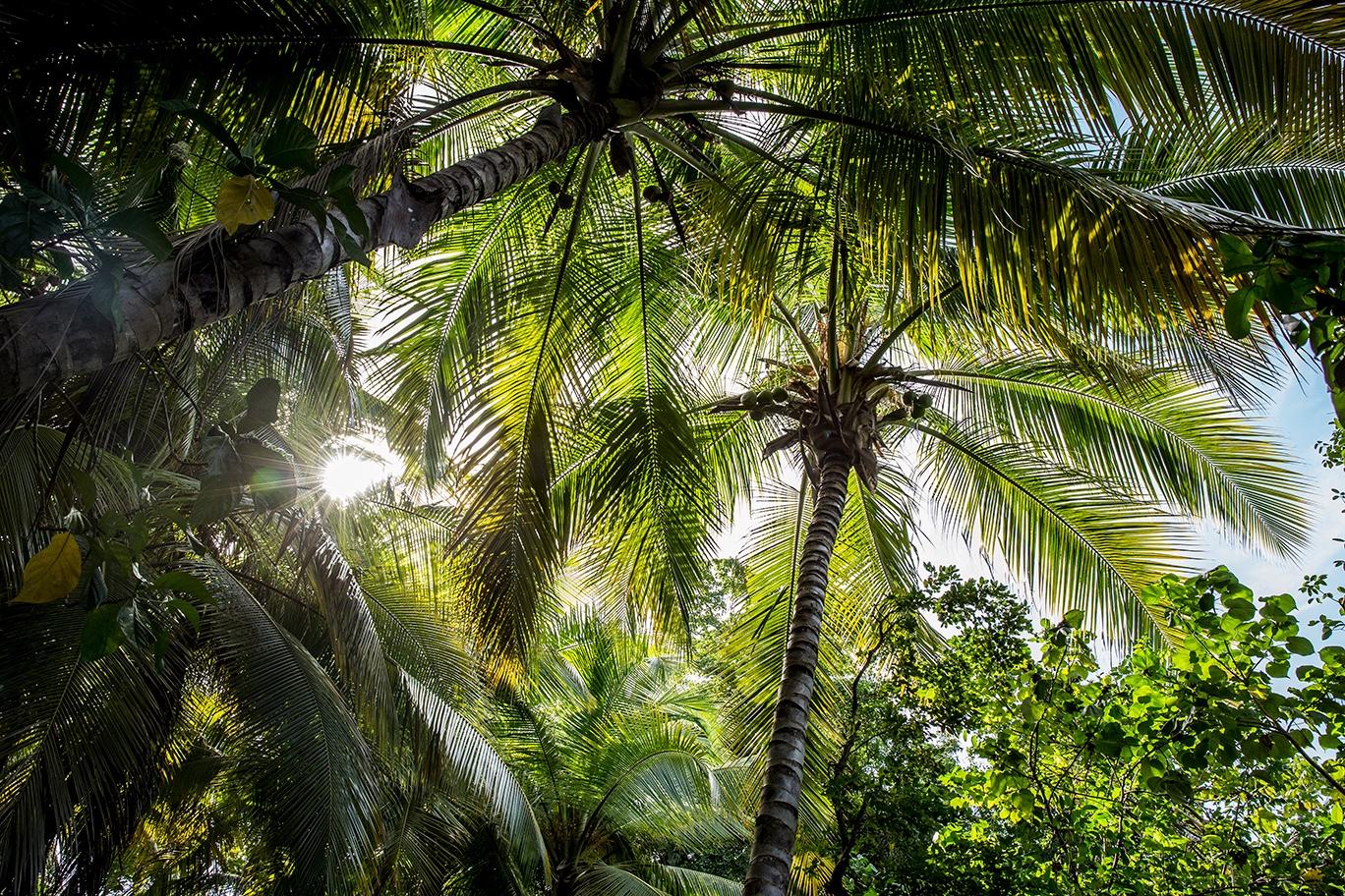 dominicana-patrycja-borzecka-photo01