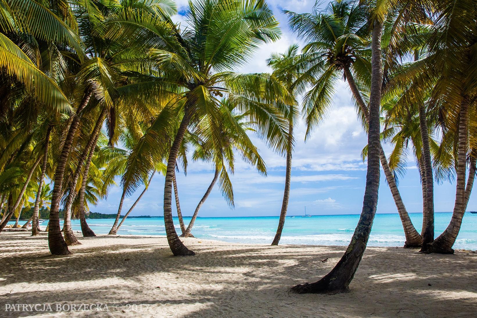 Dominicana-Palmeras-Patrycja-Borzecka-Photo